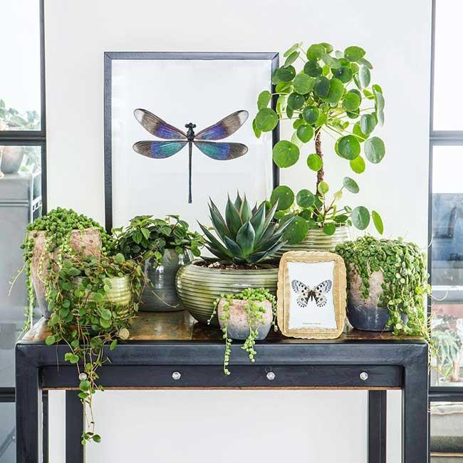 plantes vert deco maison everydeco