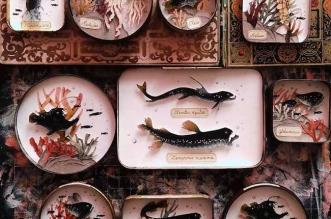 La Vie des Créatures Marines Illustrée en Dioramas