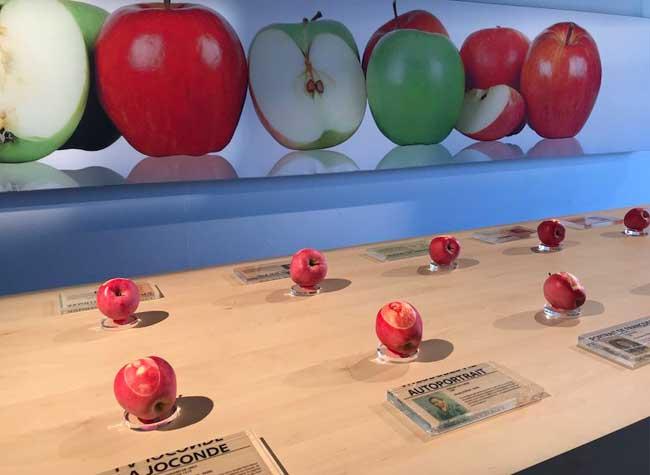 exposition pommes moselle apple store, Un 'Apple Store' avec de Vraies Pommes Ya que ça de Vrai
