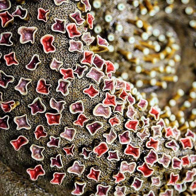 installation art recif corail ceramique courtney mattison, Cet Etonnant Récif Corallien en Porcelaine Alerte sur les Changements Climatiques