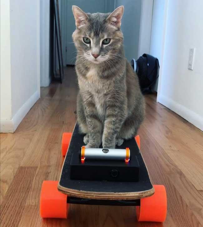 skateboard electrique chat diy, Pour Divertir son Chat il Lui Bricole un Skateboard Electrique