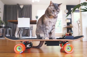skateboard electrique chat diy