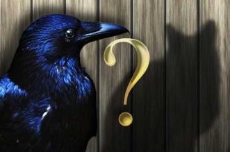illusion optique chat corbeau portrait robert maguire
