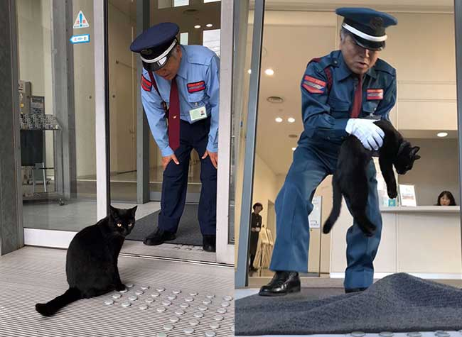 , Depuis 2 Ans ces Chats Veulent Absolument Entrer dans ce Musée au Japon