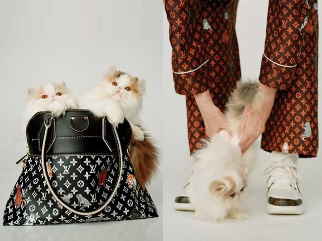louis vuitton catogram collection capsule grace goddington