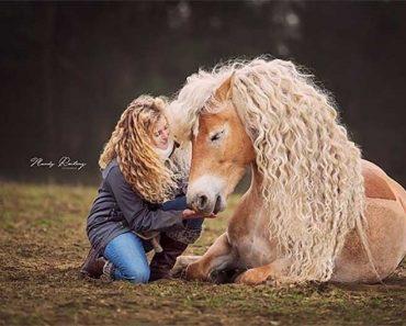 rapunzel haflinger cheval criniere frisee ondulee 1 370x297 - Le Rapunzel du Cheval a une Magnifique Crinière Blonde Ondulée