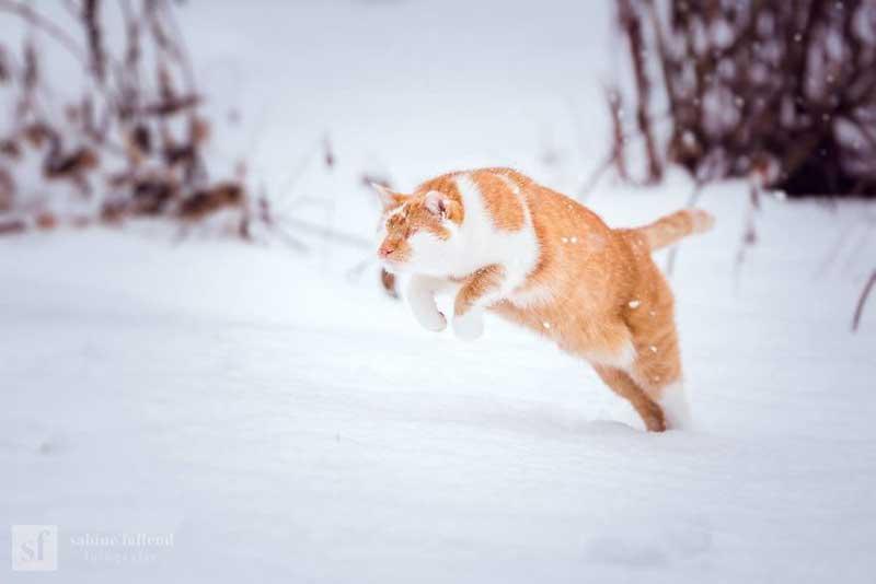 kazou chat aveugle sabine fallend portrait 2 - Kazou le Chat Aveugle qui Voit avec son Coeur