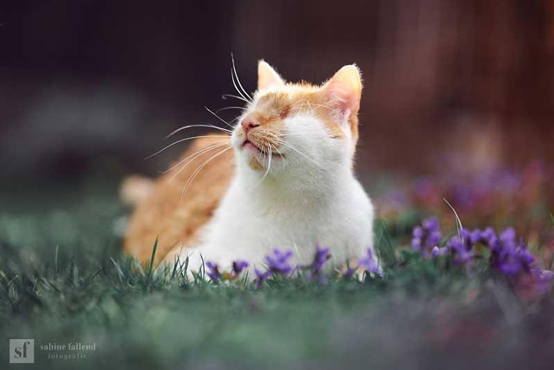 kazou chat aveugle sabine fallend portrait 3 - Kazou le Chat Aveugle qui Voit avec son Coeur