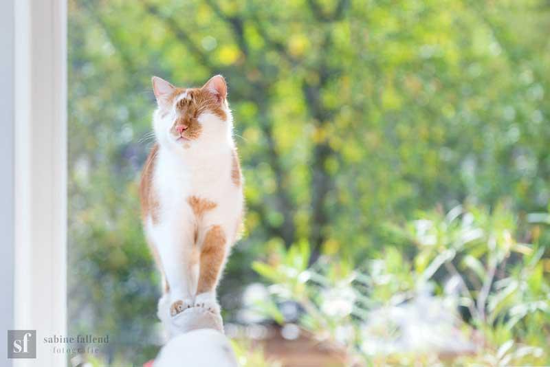 kazou chat aveugle sabine fallend portrait 5 - Kazou le Chat Aveugle qui Voit avec son Coeur