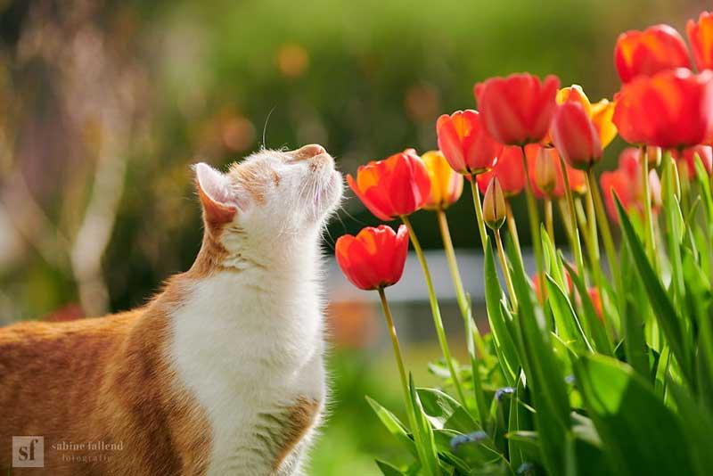 kazou chat aveugle sabine fallend portrait 6 - Kazou le Chat Aveugle qui Voit avec son Coeur