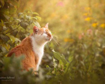 kazou chat aveugle sabine fallend portrait 9 370x297 - Kazou le Chat Aveugle qui Voit avec son Coeur