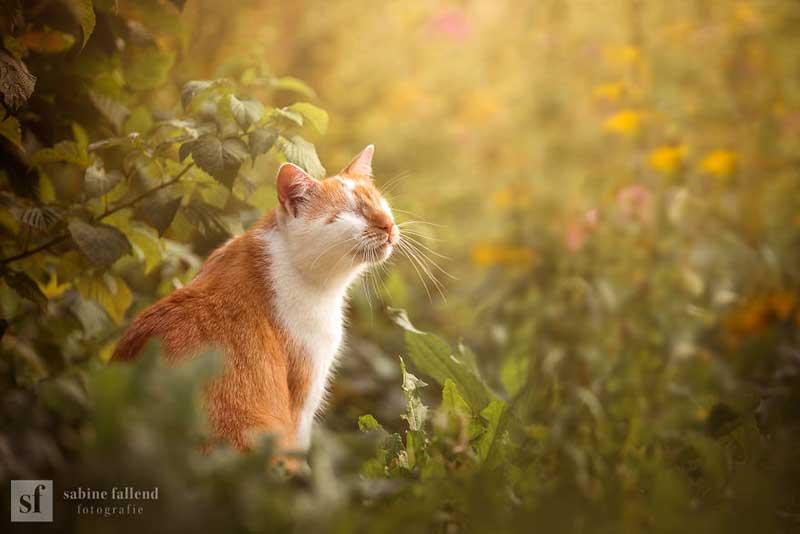 kazou chat aveugle sabine fallend portrait 9 - Kazou le Chat Aveugle qui Voit avec son Coeur