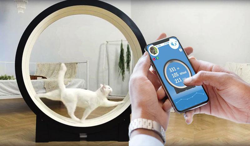 roue exercice jouet high tech chat pet ding 5 - Votre Chat va Adorer cette Roue Connectée pour Faire de l'Exercice