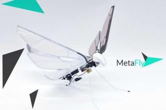 metafly drone insecte oiseau papillon