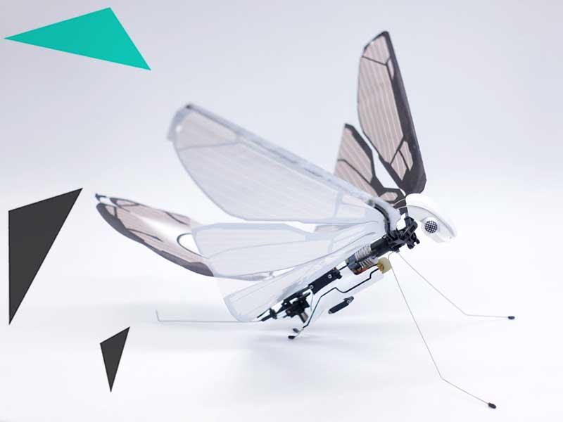 metafly drone insecte oiseau papillon ailes 2 - MetaFly, le Drone Insecte qui Vole comme un Papillon (video)