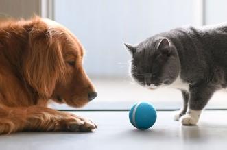 cheerble wicked balle connecte intelligente chiens chats 4 331x219 - Balle Électronique Intelligente pour Chiens et Chats (video)