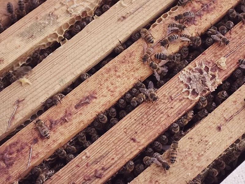 plus petit mcdonalds au monde mchive abeilles 4 - McDonald's Ouvre pour les Abeilles des Ruches McHive