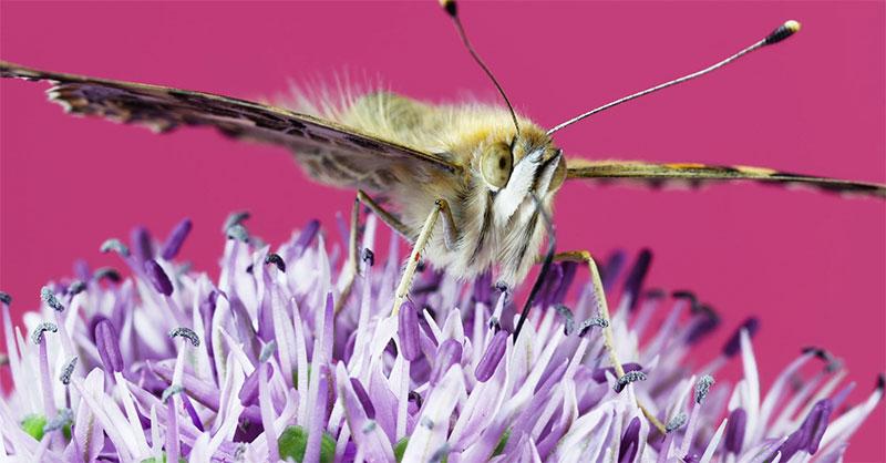 time-lapse insectes fleurs, La Vie des Insectes et des Fleurs en Video Time-Lapse 8K