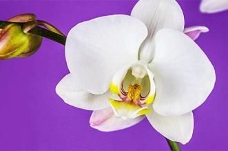 video macro time lapse insectes fleurs 4 331x219 - La Vie des Insectes et des Fleurs en Video Time-Lapse 8K