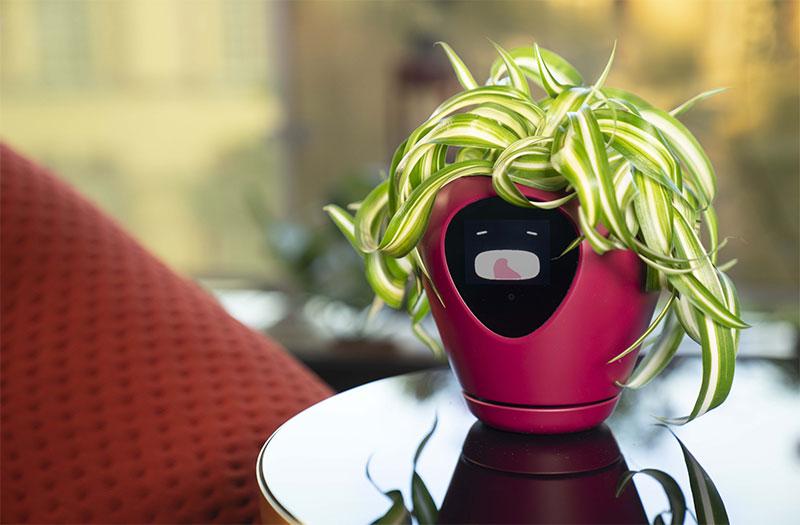 lua pot plantes fleurs connecte intelligant 02 - Lua, le Pot de Fleurs Connecté qui vous Sollicite (video)