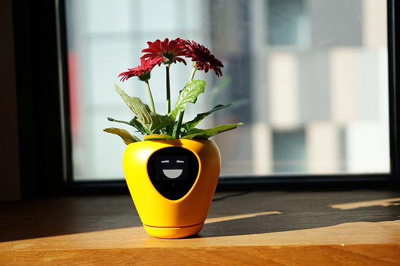 lua pot plantes fleurs connecte intelligant 03 - Lua, le Pot de Fleurs Connecté qui vous Sollicite (video)