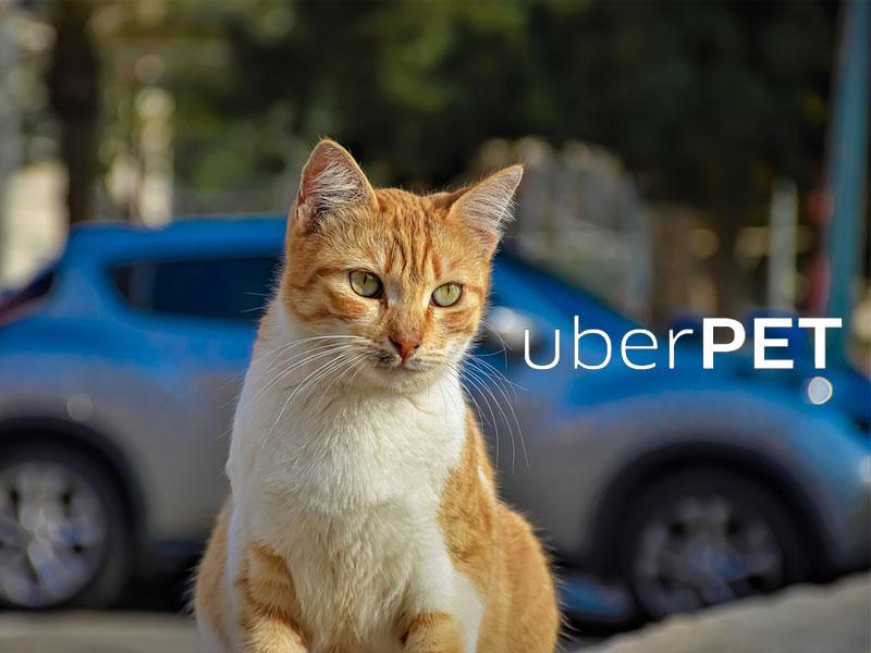 UberPet, UberPet, Voyager en VTC avec votre Animal de Compagnie