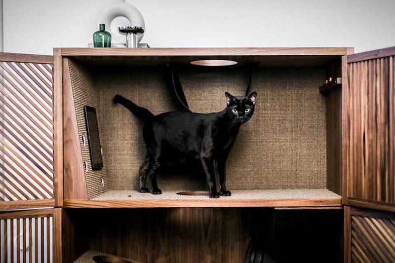 Cat Flat meuble, The Cat Flat Met les Chats dans l'Armoire et ils Adorent