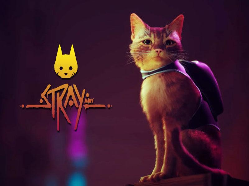 Stray jeu chat, Stray sur PS5, Devenez un Chat Errant dans une Cyber Cité (video)